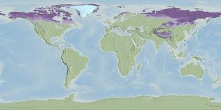 Naruto World Map by Svs Global Permafrost Layers Designed For Science On A Sphere