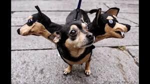 best animal halloween costumes dog halloween costumes youtube