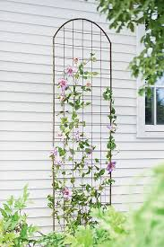 Climbing Plants On Trellis Ornate Outdoor Décor U2013 Trellis For Climbing Flowers And Vines