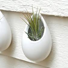 planters that hang on the wall shop white wall planter on wanelo