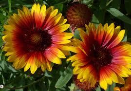 autumn flowers autumn flowers flowers pinterest autumn flowers flowers and