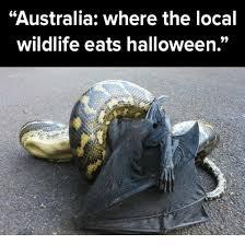 Australia Meme - australia where the local wildlife eats halloween halloween meme