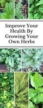 homelife 10 best plants for vertical gardens 137 best gardening images on pinterest gardening plants and garden