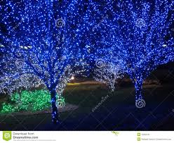 blue christmas tree pair stock image image 12222161