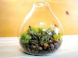 home decoration fancy terrarium plants decor inside glass bulb