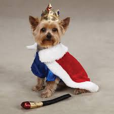 Halloween Costumes Yorkies Dogs Small Dog Costume Chihuahua Maltese Yorkie Toy Dog King Costume