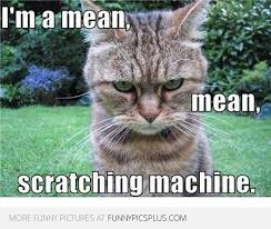 Mean Cat Meme - mean scratching machine funny pictures