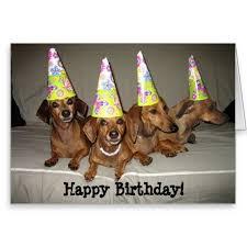 Weiner Dog Meme - free ecard dachshund birthday greetings dachshund birthday meme
