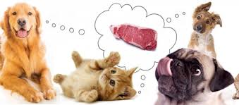 what do veterinarians think about a raw diet for dogs and cats