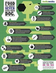 foods that your dog should never eat veterinary secrets blog
