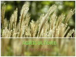 agriculture in india authorstream