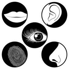 significado de imagenes sensoriales wikipedia fenómenos perceptivos monografias com