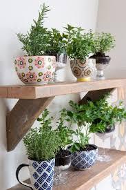 windowsill herb garden kit indoor hanging herb garden ikea