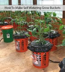 diy self watering alaska grow buckets the prepared page