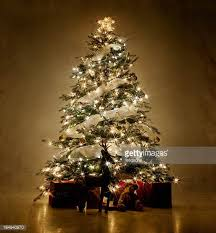 where can i find a brown christmas tree christmas tree stock photos and pictures getty images