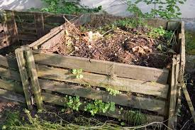 10 things you should not put in your compost pile sff