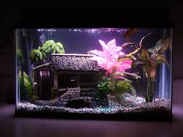 interior design simple fish tank decoration themes room design