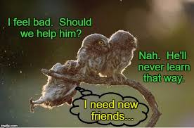 Funny Owl Meme - pretend you don t see him imgflip