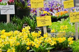 Flowers For Sale Usa New York New York City Flowers For Sale On Flower Market Stock