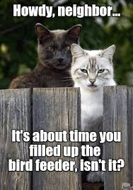Mean Cat Memes - those poor starving cats i mean birds lolcats lol cat