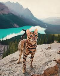 Cat Instagram Suki The Cat U2013 The Adventures Of A Beautiful Cat Across Wild