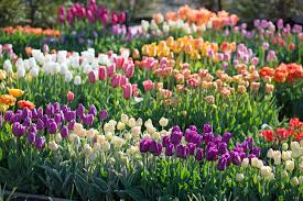 how we select the best flower bulbs for your spring garden