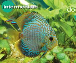 Buy Ornamental Fish Tropical Aquarium Fish Food Nutrition Vitamins For Aquarium Fish