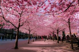 Beautiful Spring | 16 of the most beautiful spring alleys from around the world