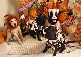Dog Halloween Costume Lion Mane Lion Costume Dog Justonemorepet