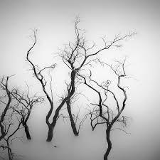 sparse tree hengki koentjoro photography digital limited