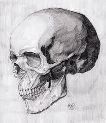 skull three quarter critique third