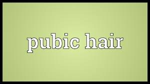 pretty pubic hair defined pubic hair meaning youtube