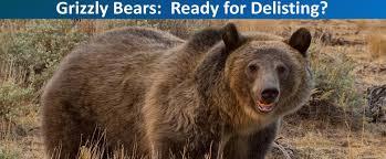 bear trust international