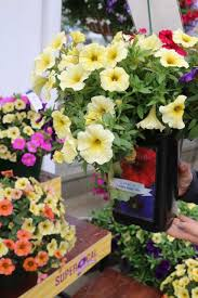 sakata ornamentals 2016 california trials birthday bash