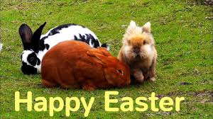 happy easter sunday pics u0026 images free for instagram pinterest fb
