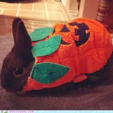 Halloween Costumes Bunny Rabbits 80 Bloodsucking Bunnies Halloween Images