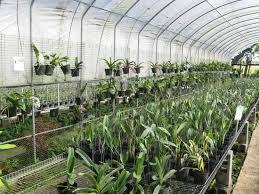 orchid plants for sale plants for sale review of 96 orchid garden belmopan belize