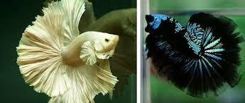 ornamental fish culture apk version 1 0