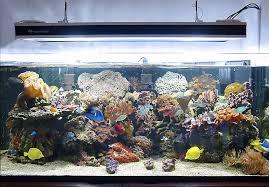 Vasche Da Giardino Per Pesci by Costruire Un Acquario Aperto Da 200 Litri Con Sump Zanclus It
