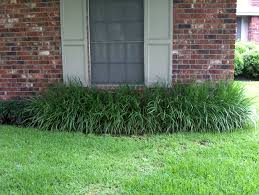 houston native plants 33 best plant materials for houston ground covers images on