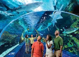 ripley u0027s aquarium of the smokies gatlinburg things to do