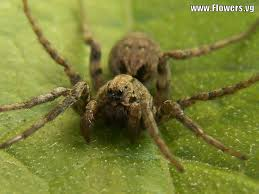 17 Best Images About Spider - 90 best spiders images on pinterest spiders hand spinning and