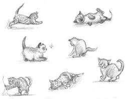 drawn kittens anatomy pencil and in color drawn kittens anatomy