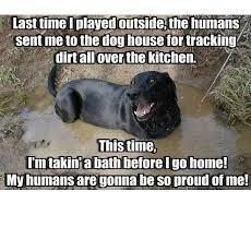 45 funny dog memes dogtime