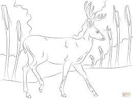 walking mule deer coloring page free printable coloring pages