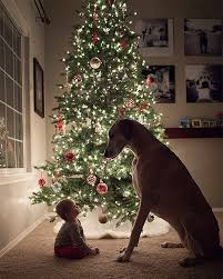25 best christmas photos ideas on pinterest xmas photos family