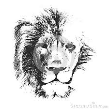vector sketch style drawing of male lion face pictures