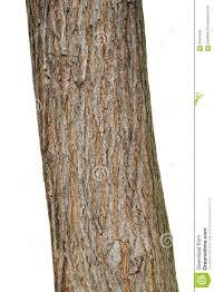 White Oak Tree Bark Tree Bark Texture Isolated On White Oak Wood Background Stock