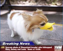 Breaking News Meme - i can has cheezburger breaking news funny animals online