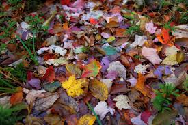 autumn pictures fall d i y halloween haammss